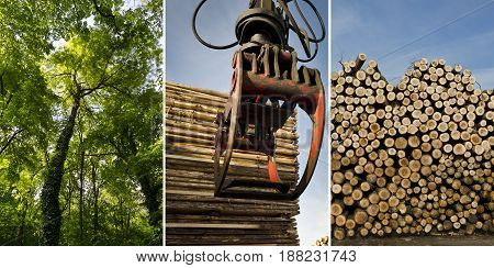 Collage of deforestation of woods and wooden logs