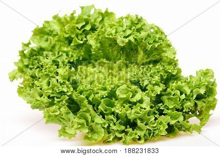 Leafy Vegetables Or Green Lettuce Leaf Isolated On White
