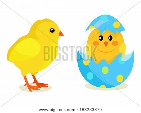 Colorful fluffy spring yellow chicken and newborn chick hatched from shell isolated on white background. Mascots of Easter celebration, symbols of new life vector illustration. Friendly feast animals