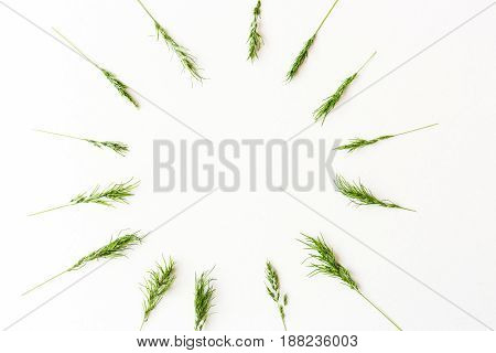 Ears of a green cereal form a pattern of a circle lying on a white background. Flat lay. Concept of healthy lifestile, summer mood. minimalistic picture of the ripening harvest. Space for the text.