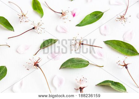 white background filled with uniformly but symmetrically arranged sakura flowers and leaves. Flat lay. top view. concept of spring, lightness and elegance.