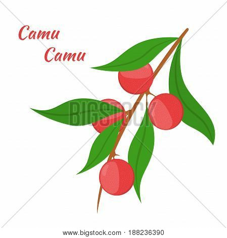 Superfood camu camu in cartoon flat style. Red camu berries, fruit. Vegetarian nutrition.