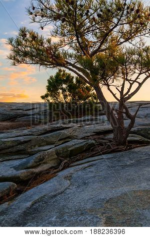 The pine tree on the top of the Stone Mountain at sunset Georgia USA