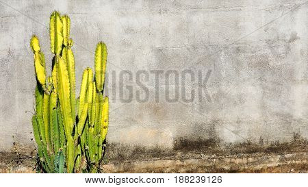 Background block wall has cactus tree yellow and green color and small flowers in the afternoon.