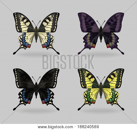 A collection of vibrant multy color insect Papilio machaon butterflies. Realistic close-up look, delicate wing pattern, 4 colour variations.