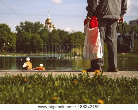 passerby looks at the ducks the pond and the Park. Feet men cityscape temple