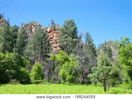 Green pine trees grassy meadow in foreground red rocks peaking out from behind the trees. The red color is caused by hematite (iron oxide otherwise known as rust) that stains the sandstone.
