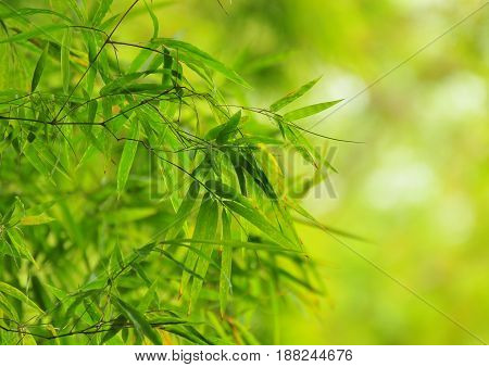 The tip of a small green bamboo on a bokeh background.