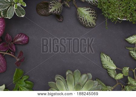 Background with variegated leaves. Episcia and succulent. Top view with place for your text.
