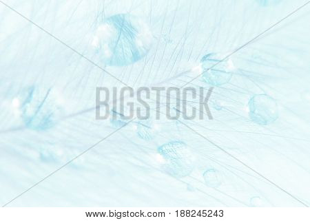 Beautiful background of fluffy blue feather with water drops close-up
