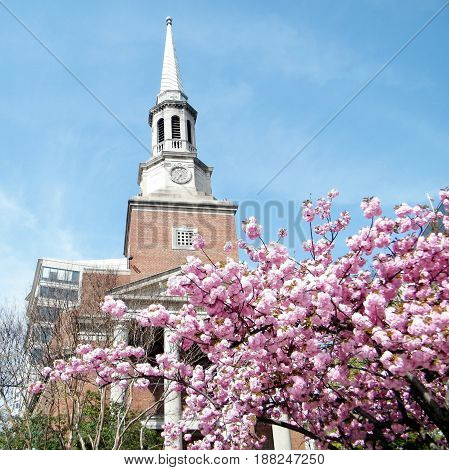Sakura in front of Church in Washington DC USA