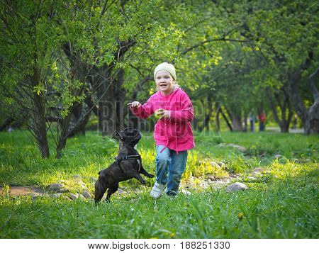 A small child plays with a dog. Fast girl running in the Park.