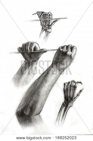 Illustration of academic drawing hands of the human