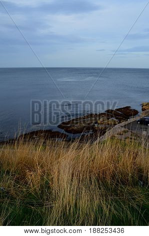 St Andrew's coastal views with tall grass.