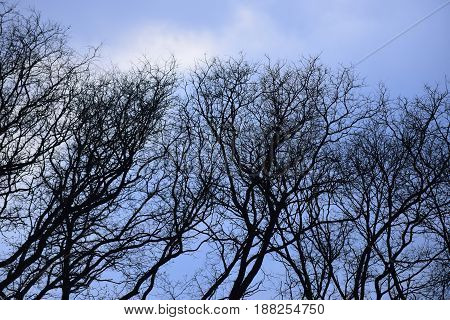Branches With Bare Tree In Forest On Blue Sky