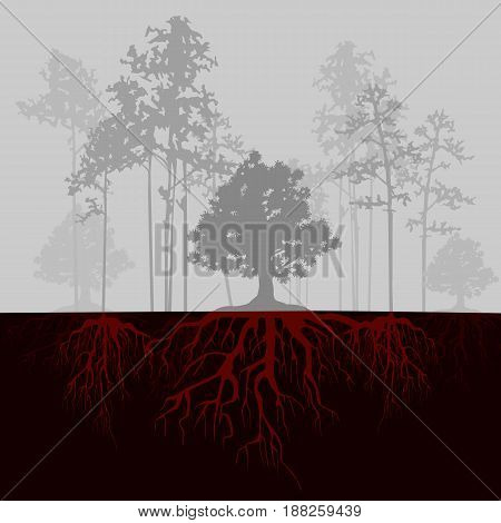 Split illustration with trees and red roots. Fog in the forest