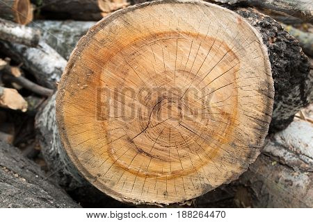 Cutting brown tree wood ring 2 color texture