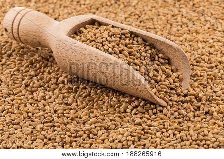 Wheat Grain On White