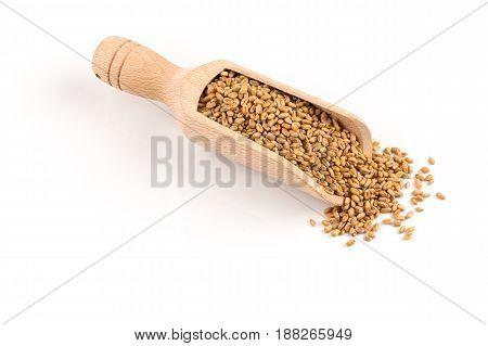 Wheat Grain In Scoop