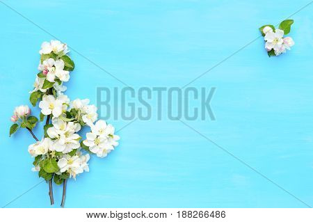White Spring Nature Background With Blossom On Blue Wooden Background. Top View. Springtime Concept