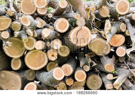 Cutting tree wood logs randomly located In the heap