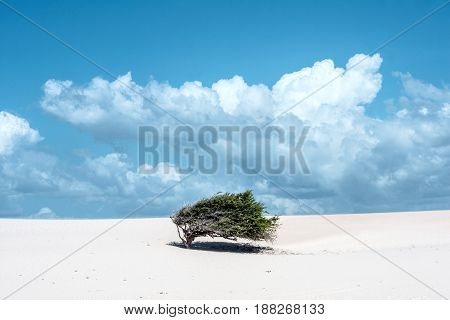 Lonely tree-flag in the desert on the way to the national park Jericoacoara Ceara state Brazil