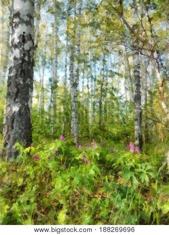 Tall Slender White Birch Forest.  Russian Spring Landscape Watercolor Illustration. Photo Manipulati
