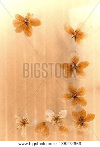 Transparent Pressed Flowers And Petals Of Apple