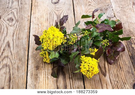 Branch with leaves and yellow flowers on wooden background. Studio Photo
