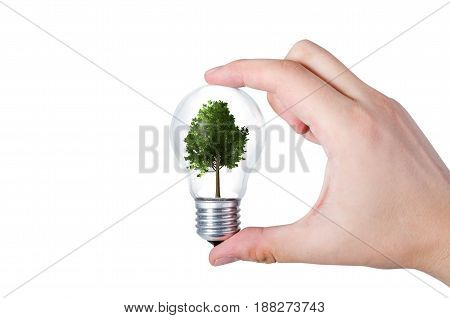Energy efficiency concept. Abstract composition with tree in bulb on white background