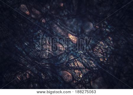 Dark microscopic organic section texture. Abstract background.