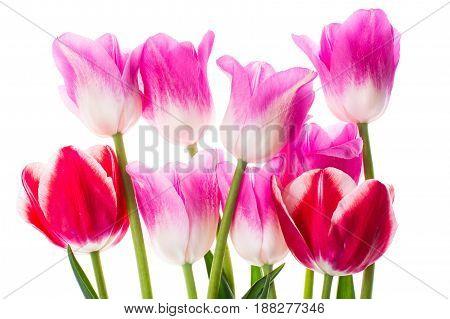 Bouquet of different color tulips. Studio Photo