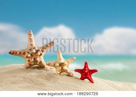 Sea stars are beautiful sea landscape . Suitable as a card.