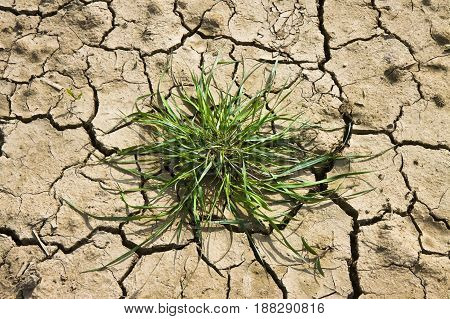 Infertile land burned with grass by the sun