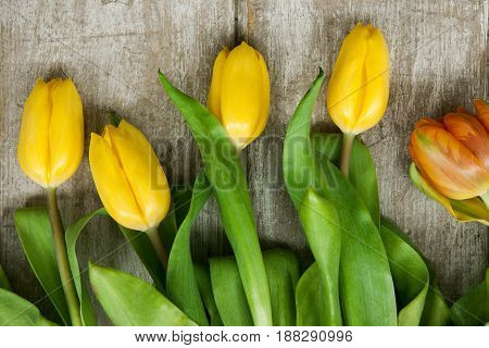 Tulip yellow flowers spring bouquet on grey wooden background. Cute design for easter, 8 march, mother day celebration