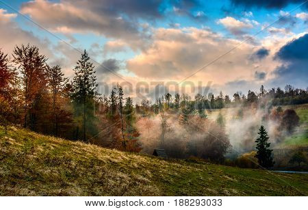 Evening Fog In Forest On The Hill
