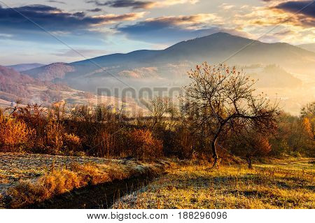 Orchard On A Hillside At Foggy Sunrise In Mountains
