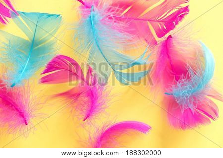 Feathers Abstract Background. Background For Design With Soft Colorfull Feathers Pattern. Soft Fluff