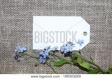 The forget-me-not branch on a blank card on an unpainted canvas