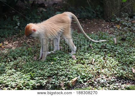 Monkeys are busy with their chores Singapore Southeast Asia