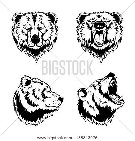 Hand drawn ink engravings set of four bear head in different angles and moods isolated on white background vector illustration
