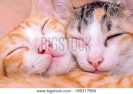 Cat Sleep.