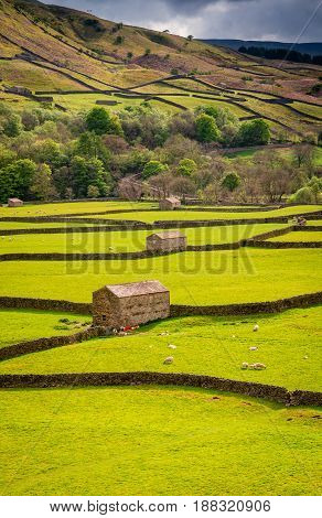 Gunnerside Field Barns - Swaledale in Yorkshire Dales National Park winds into the northern Pennines. It is famous for its meadows field barns and drystone walls.