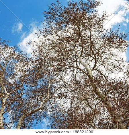 Tree And The Sky  Light
