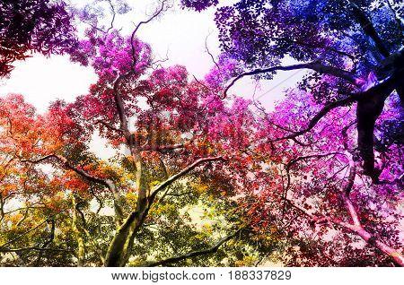 Colorful vibrant nature landscape / Nature theme