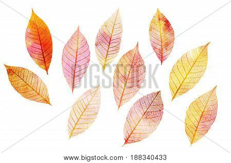 A set of golden toned skeleton leaves on white background, autumnal design elements
