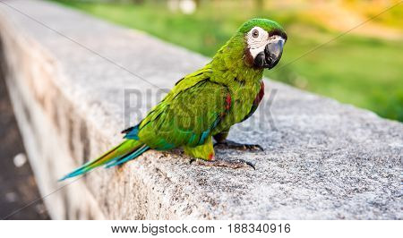 Parrot lovely bird animal and pet at natural park