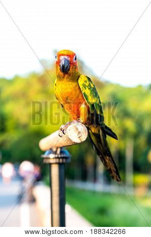 Parrot lovely bird animal and pet in the garden