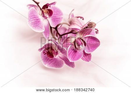 The branch of purple orchids on white fabric background