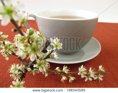 Cup of blackthorn flowers tea and twigs from blackthorn
